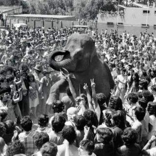 elefant06